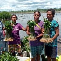 Andriaki Shipping: Αναπτύσσονται τα 60.000 δέντρα που φυτέψαμε πέρυσι στην Δ. Παπούα